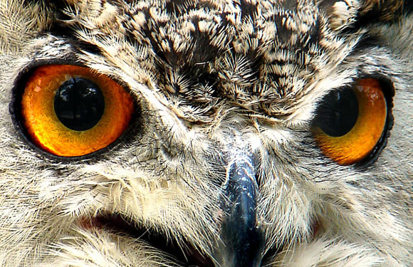 owl eyes from Photo Pin